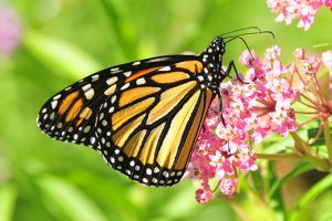 *Canceled due to weather* Spring Wildflower Walk @ The Nature Habitat
